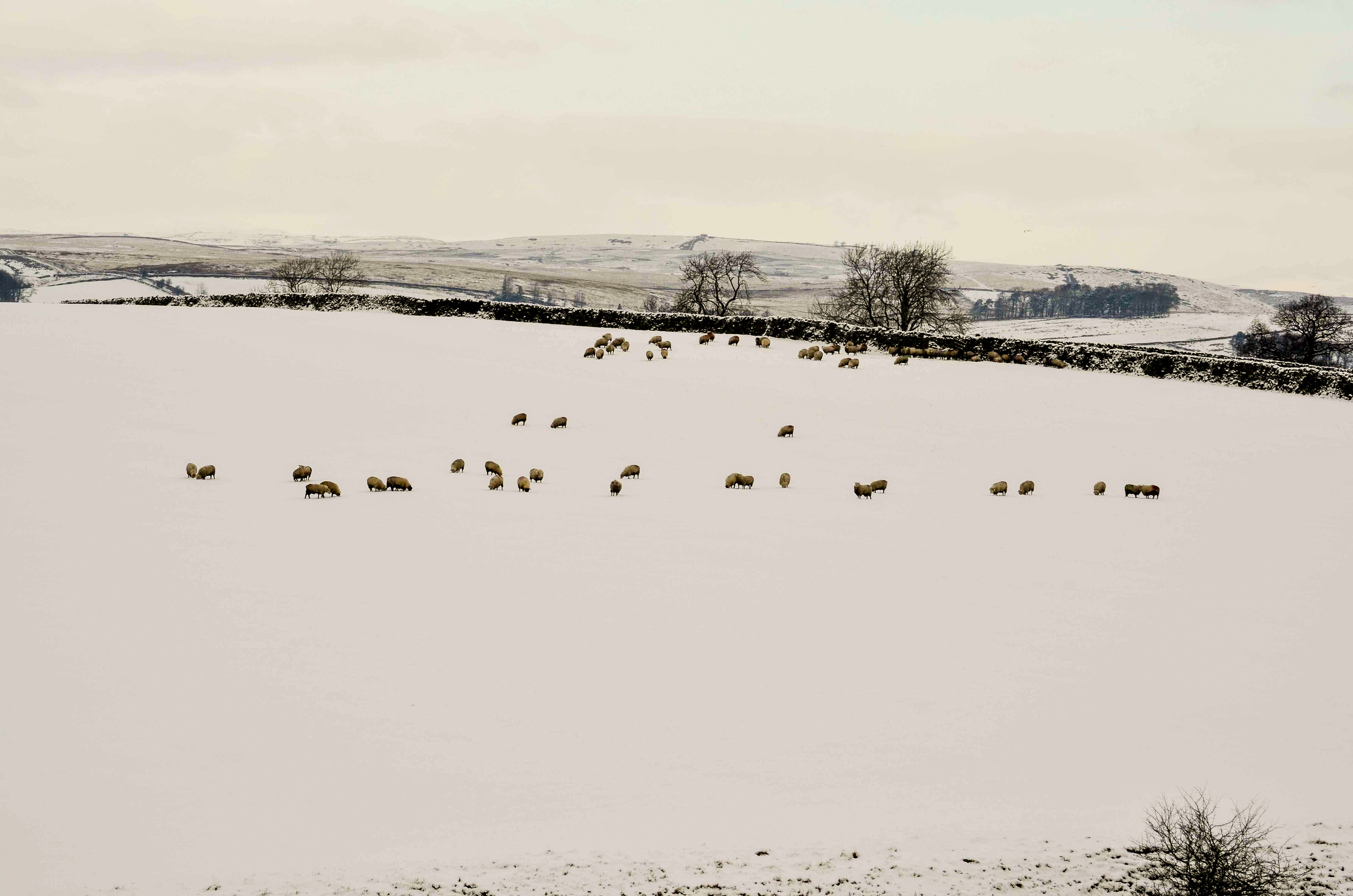 Winter Yorkshire Dales (10)