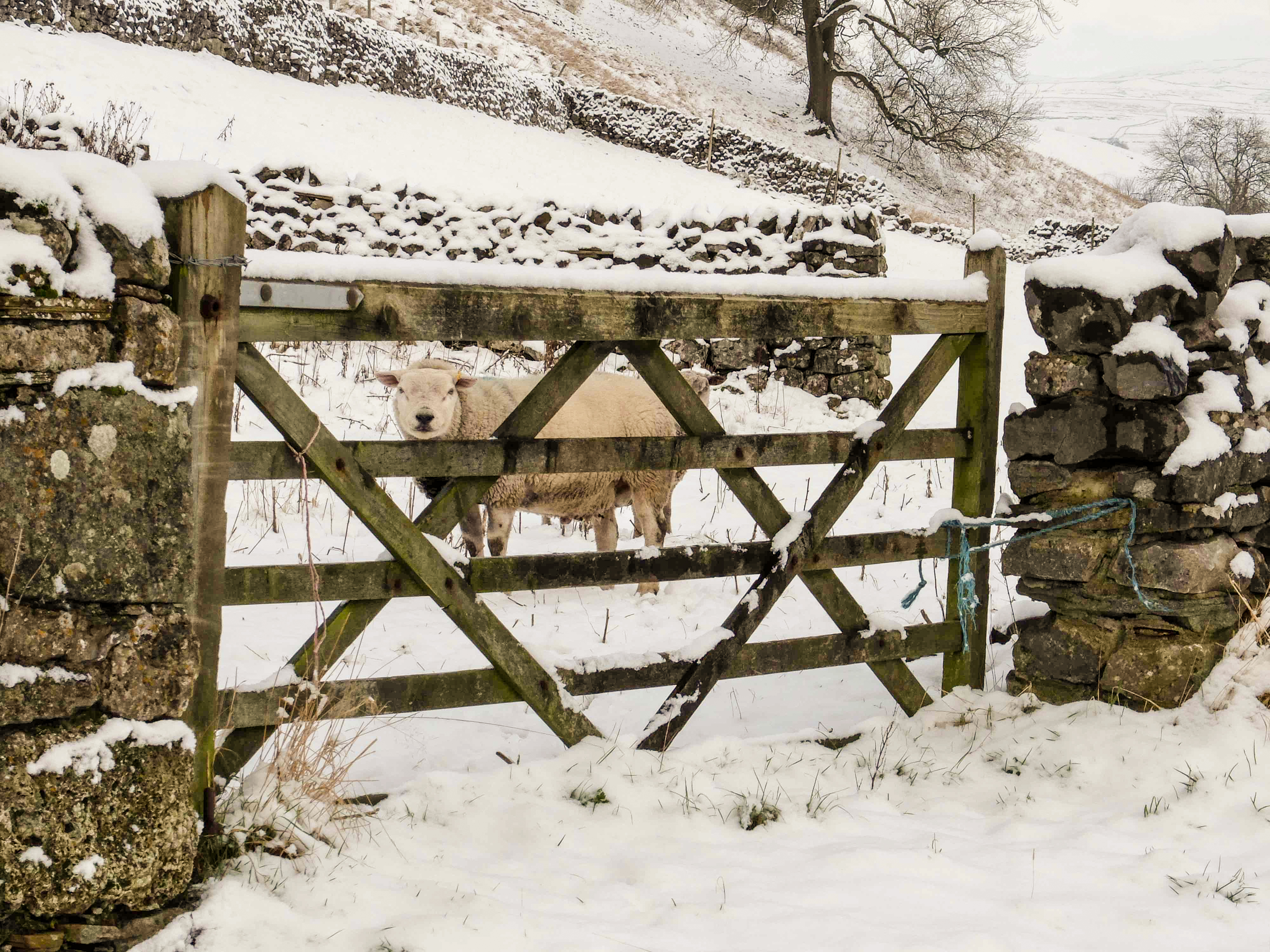Winter Yorkshire Dales (7)
